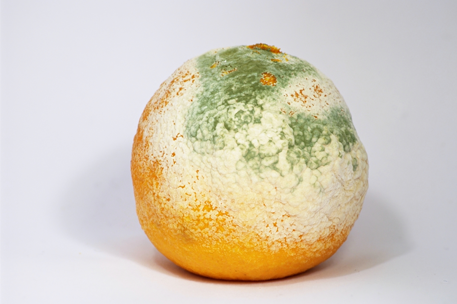 Mouldy Clementine
